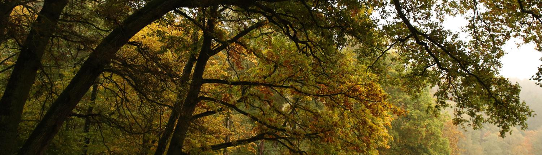 Herbstliche Bäume im Wald