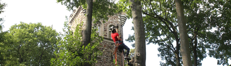 Mitarbeiter seilt sich von Baum ab