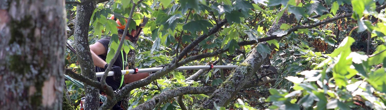 Baumpflege Schwarzwald