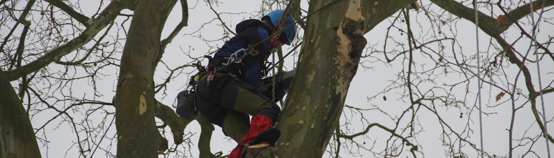 Mitarbeiter bei Arbeiten im Baum