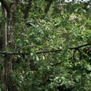 Baumpflege Mahlberg Sicherung