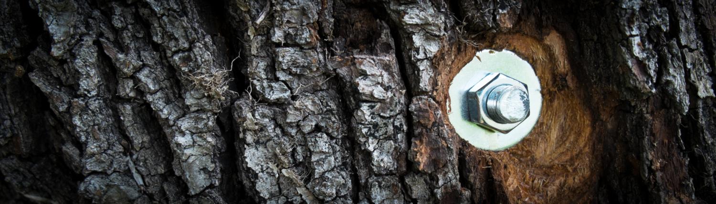 Sicherung im Baum