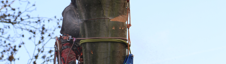 Seilkletterer, der einen Baum fällt.